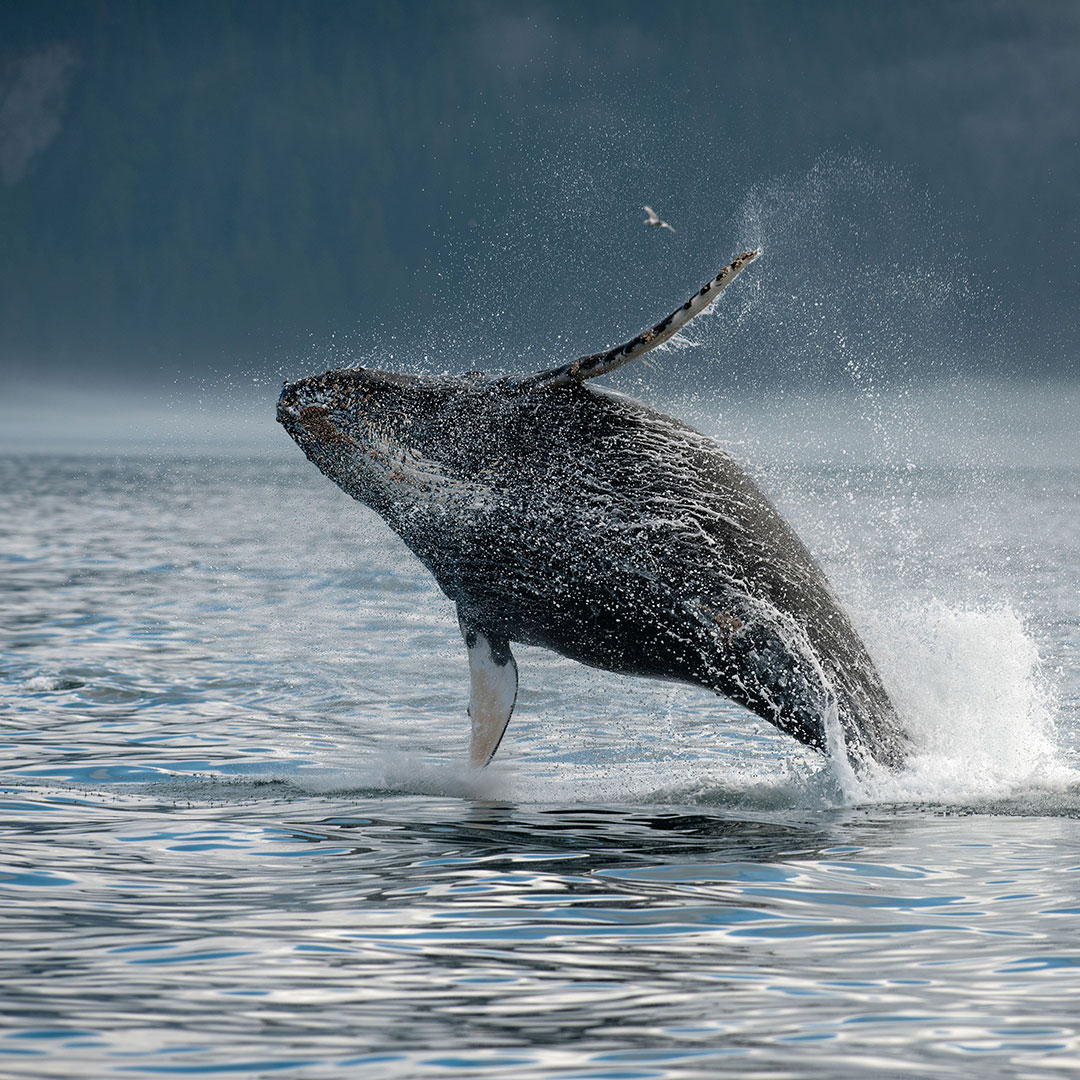 Alaska Wilderness Charters: Bears, Eagles and Whales